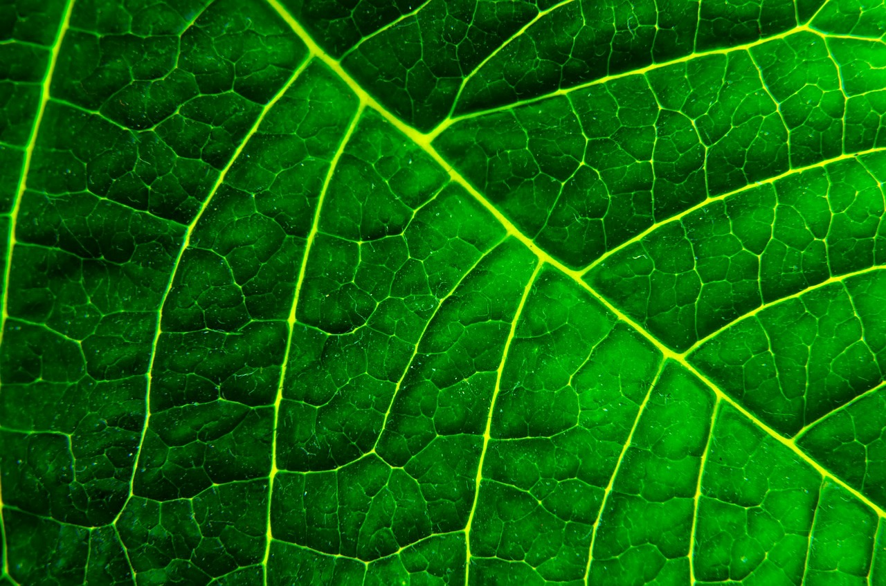 Woordspel - fotosynthese